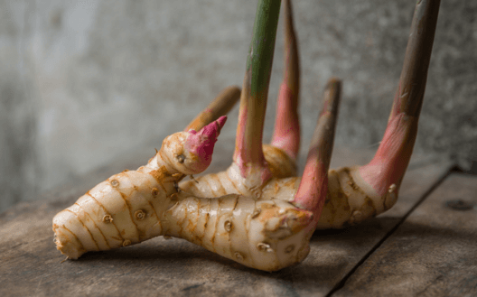 galangal-thai-spices